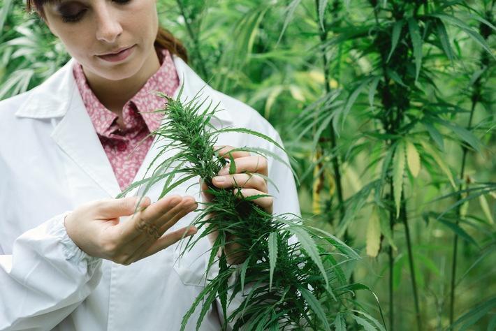 patienten-bei-cannabis-anwendung-nicht-im-stich-lassen