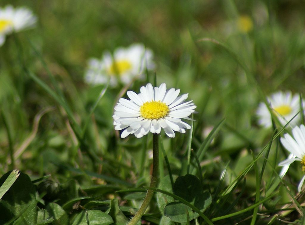 Hübsch und lecker – Expertentipps zum Umgang mit essbaren Blüten
