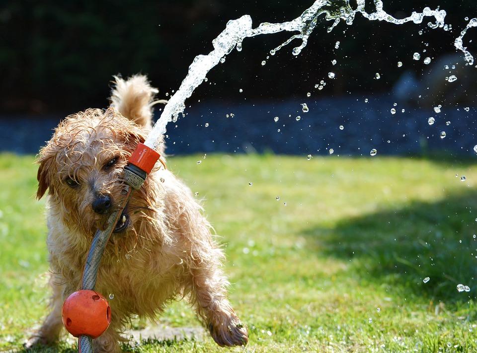 Hund, Katze, Maus – Haustiere machen gesund und glücklich