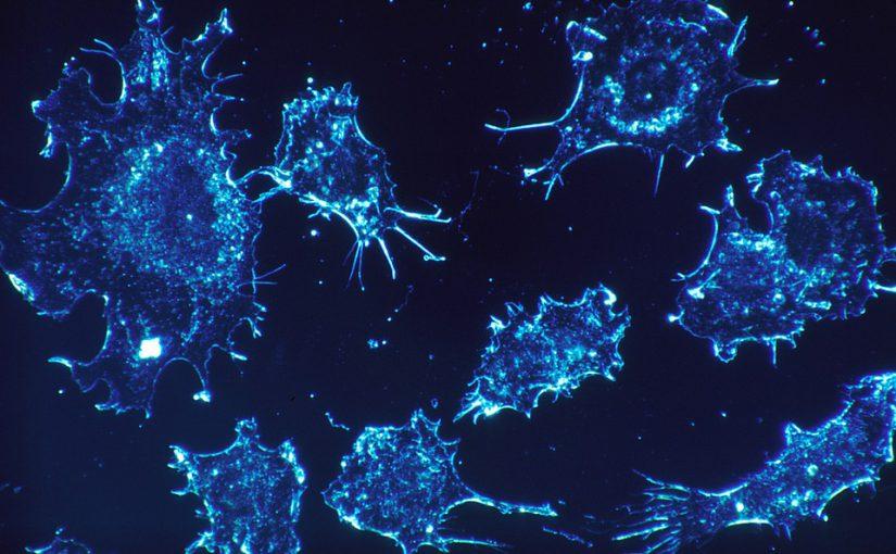 Metastasen verhindern – Heilungschancen erhöhen – Forscher haben wichtige Signalmoleküle in Blutgefäßen entdeckt