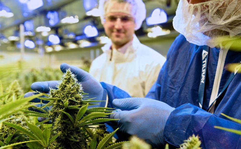 Cannabis, das langersehnte Wundermittel?