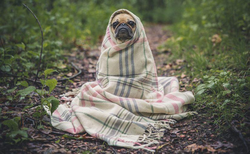 Haustier ist wichtigstes Mittel, um Stressgefühl in der Krise zu reduzieren